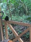 Tamarin monkeys!!