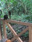 Tamarin monkeys!!
