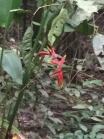 Flower :D